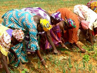 Coopératives Agricoles en Afrique