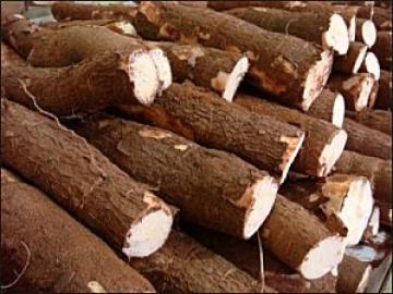 bien cultiver le manioc en c te d 39 ivoire l r bou r. Black Bedroom Furniture Sets. Home Design Ideas