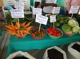 Agriculture écologique et biologique