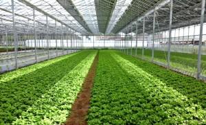 Nouvelle pratique agricole