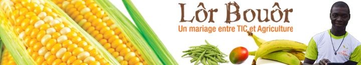 Un mariage entre TIC et Agriculture