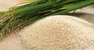 riz-nerica-1130x600