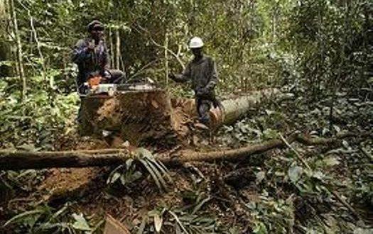 Réduction-des-forêts-ivoiriennes-lorbouor