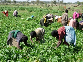 agriculture-ethiopia