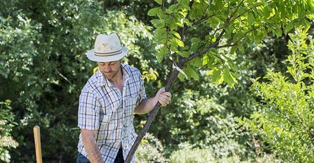 plantation-arbre-fruitier